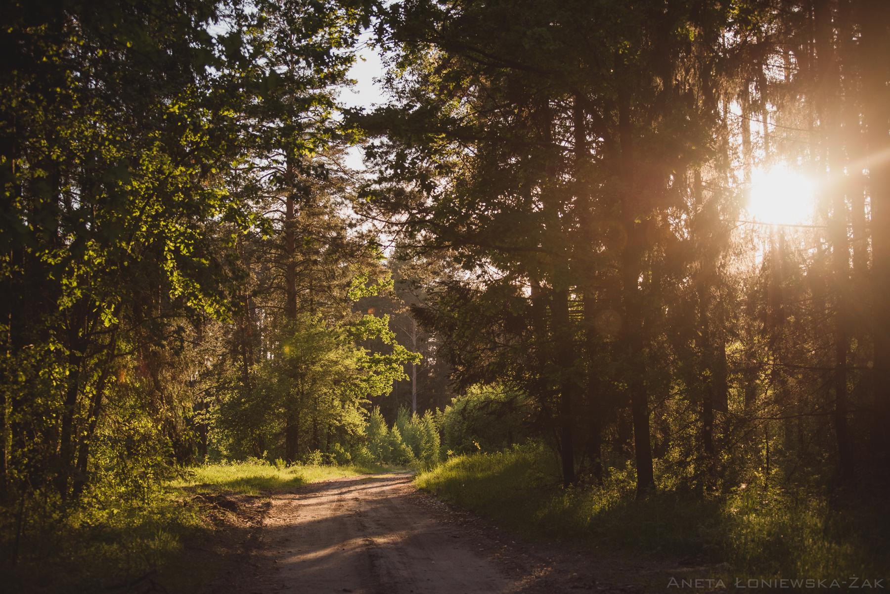 fotografia przyrodnicza, puszcza knyszyńska, droga las