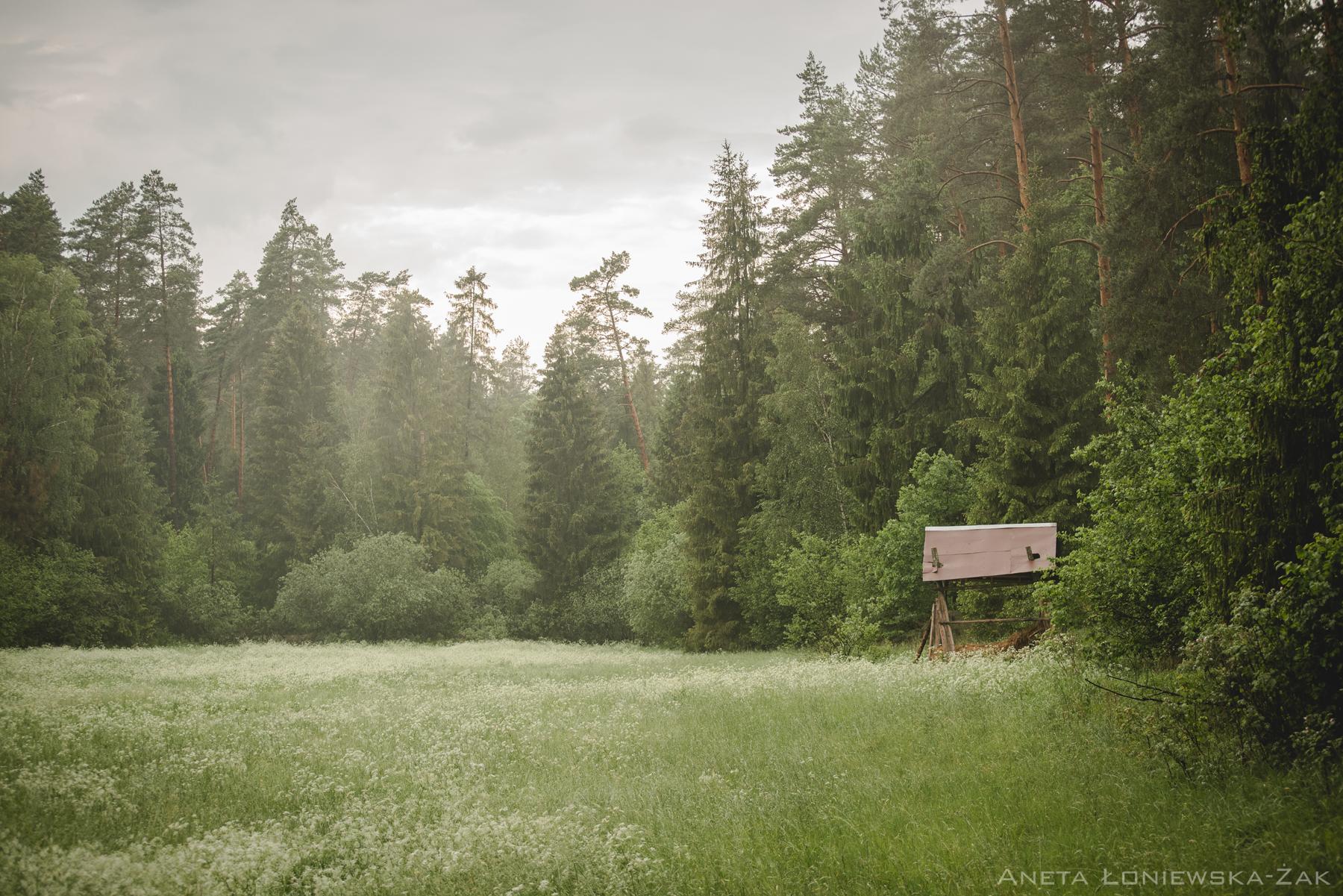 fotografia przyrodnicza, puszcza knyszyńska, las, paśnik, koło łowieckie jarząbek białystok