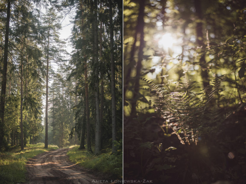 fotografia przyrodnicza, puszcza knyszyńska, paproć las