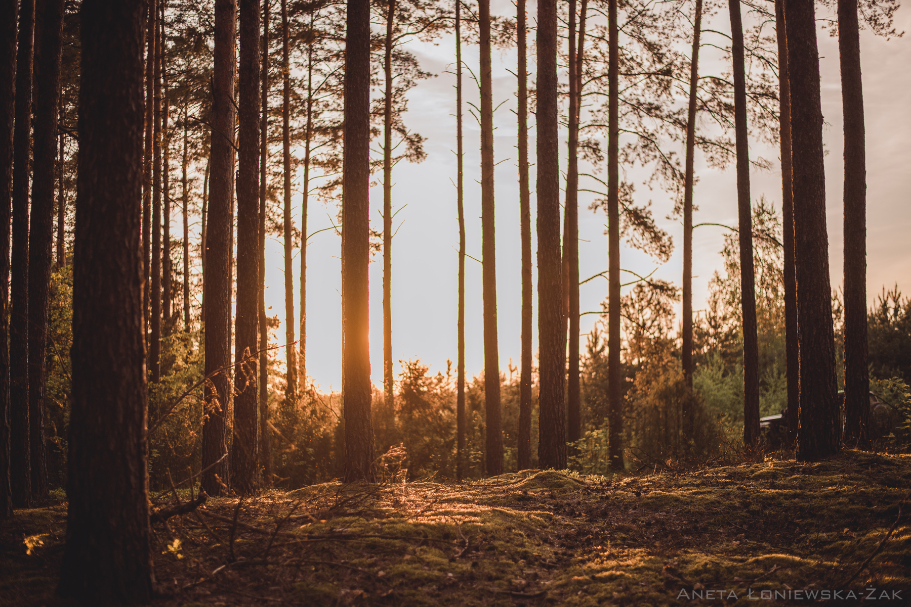 fotografia przyrodnicza, puszcza knyszyńska, las