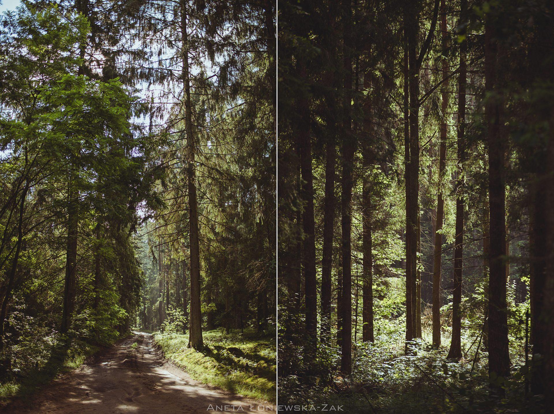 fotografia przyrodnicza, puszcza knyszyńska, podlasie lasy państwowe