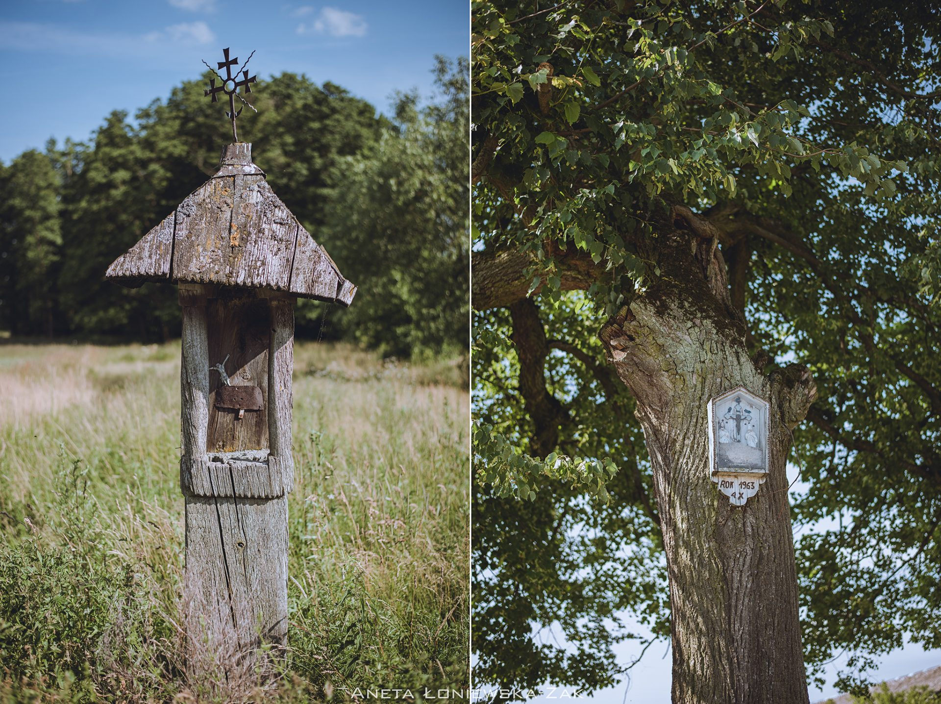 fotografia przyrodnicza, puszcza knyszyńska, podlasie