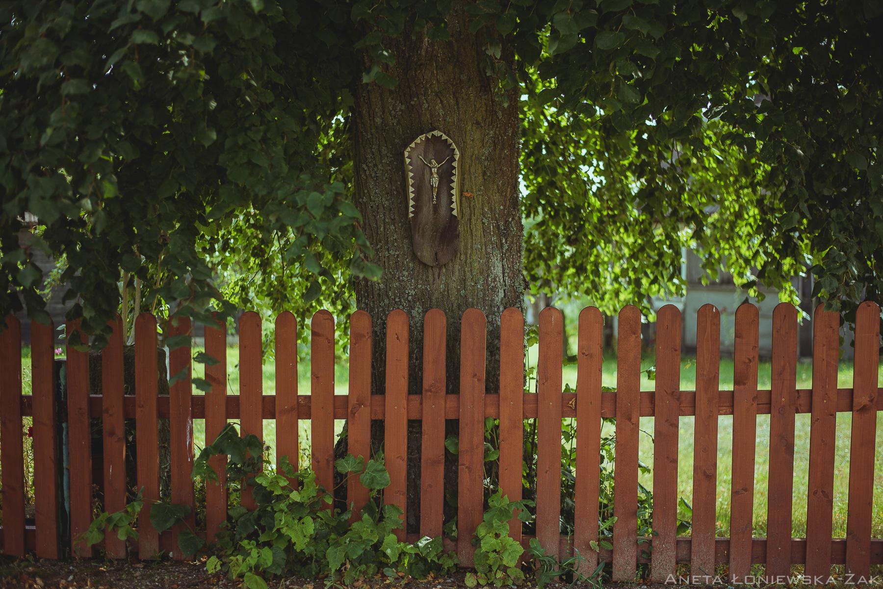 fotografia przyrodnicza, puszcza knyszyńska, podlasie, kopisk, kapliczka na drzewie
