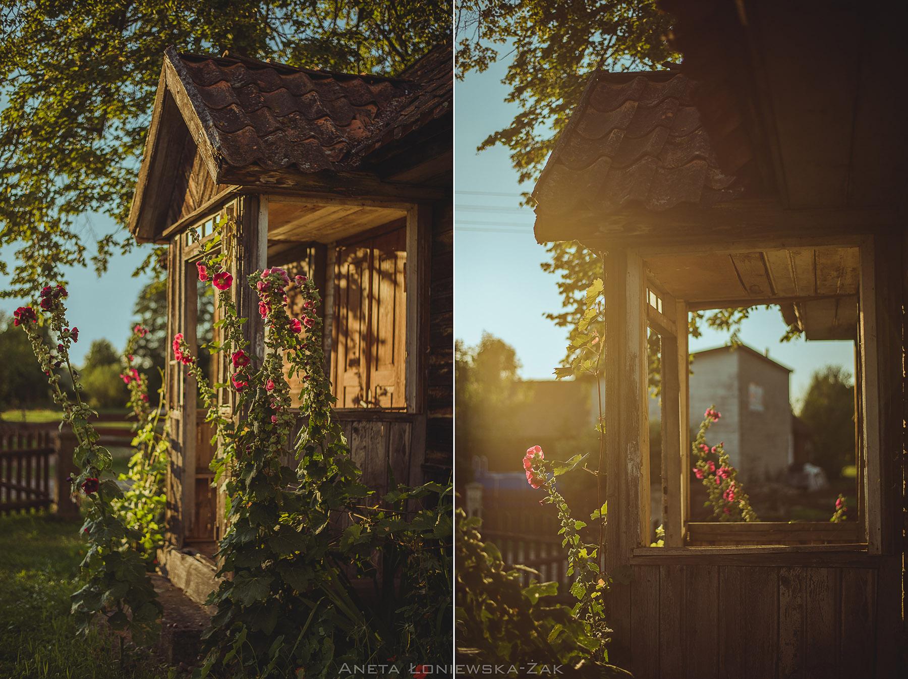 fotografia przyrodnicza, puszcza knyszyńska, podlasie, drewniany dom ganek malwy zamczysk