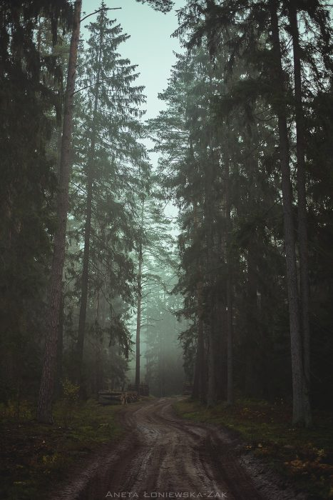 fotografia przyrodnicza, puszcza knyszyńska, podlasie, pkpk,