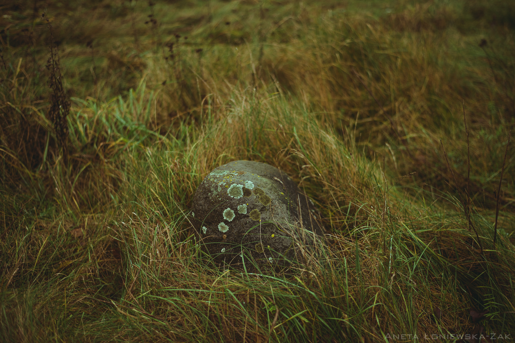 fotografia przyrodnicza, puszcza knyszyńska, podlasie, pkpk, kamień polny