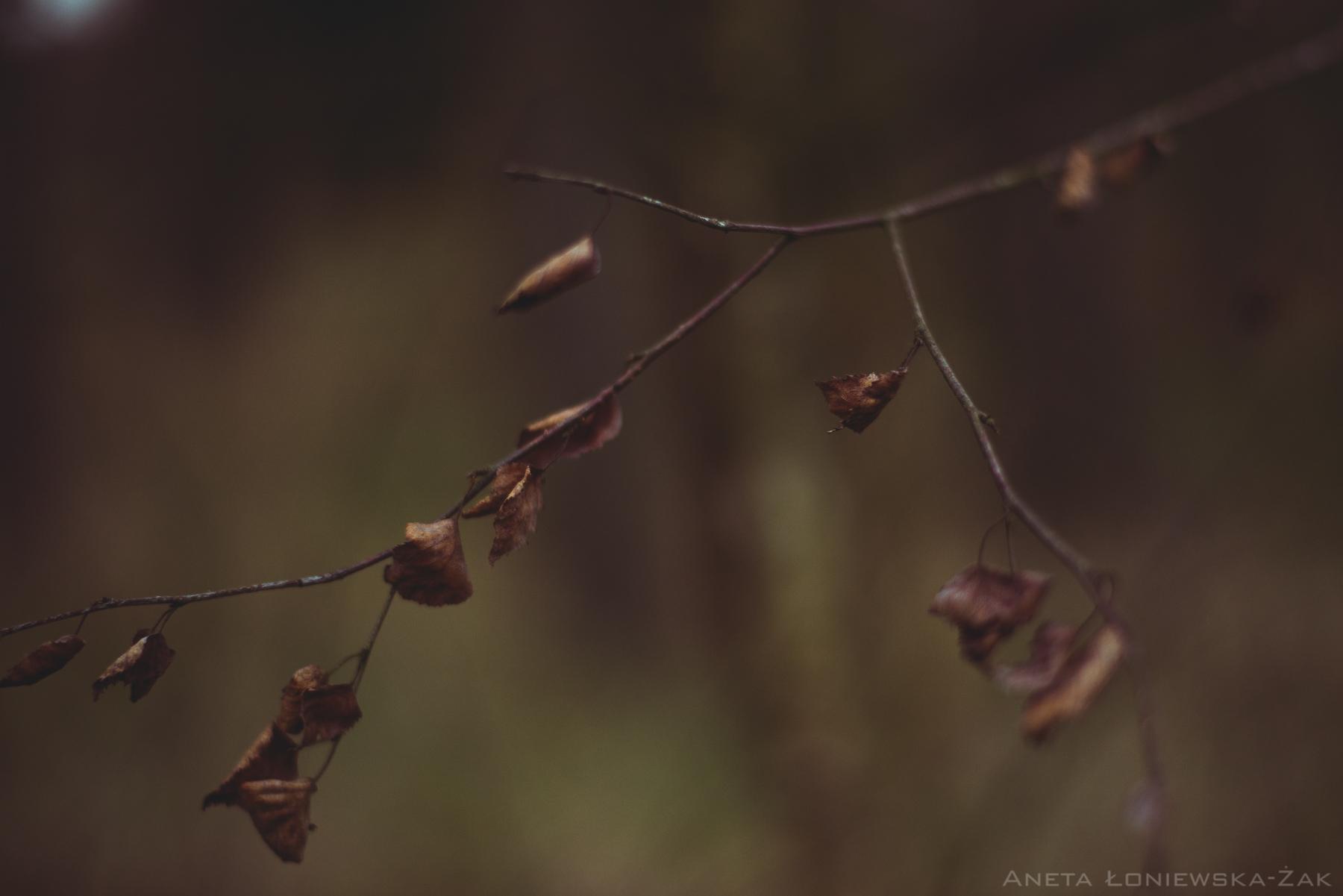 fotografia przyrodnicza, puszcza knyszyńska, podlasie, pkpk, jesień,