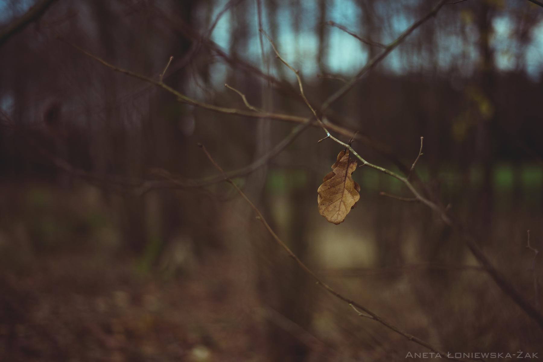 fotografia przyrodnicza, puszcza knyszyńska, podlasie, pkpk, liść dębu