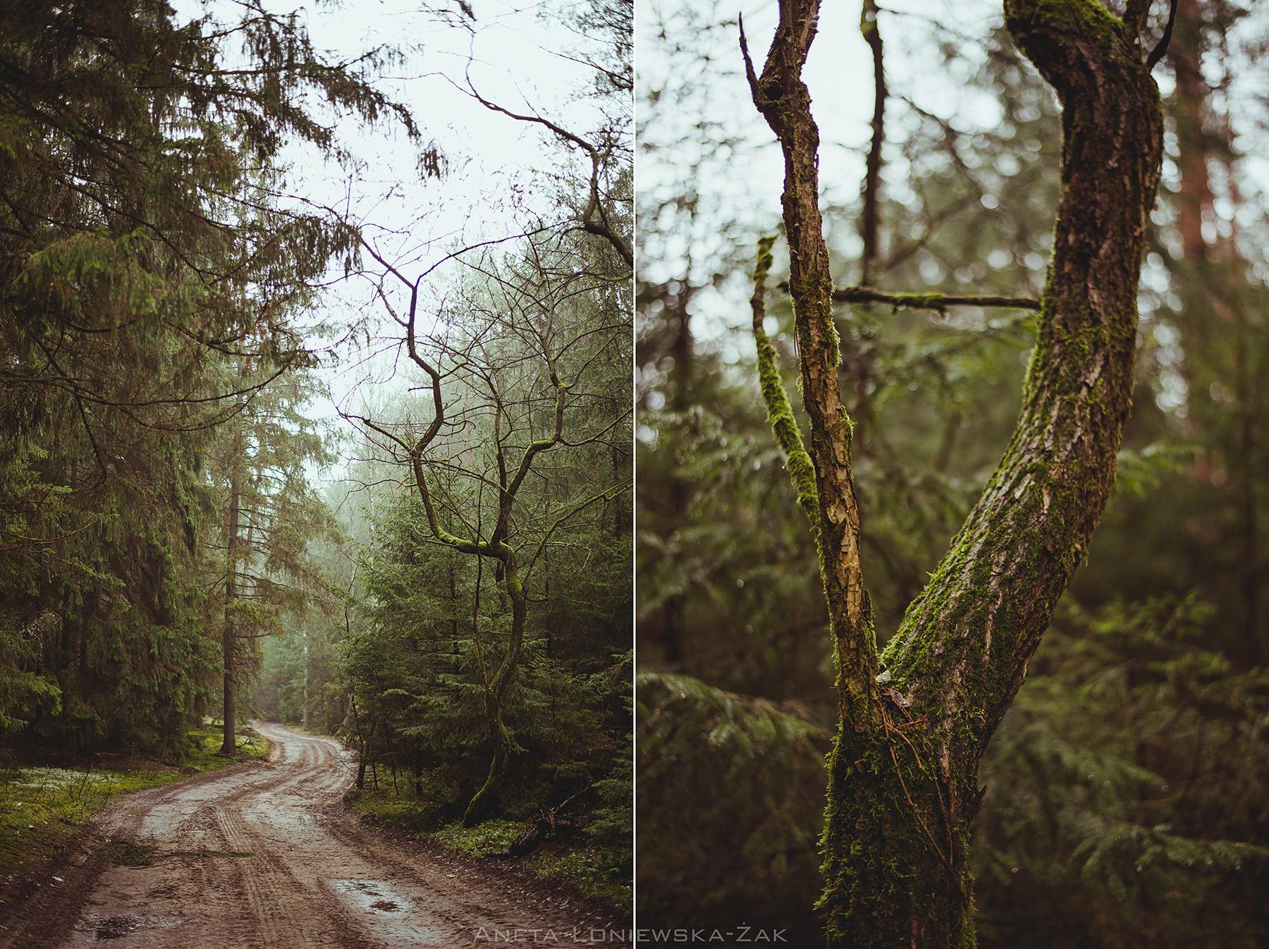 fotografia przyrodnicza, puszcza knyszyńska, podlasie, pkpk, nadleśnictwo dojlidy droga