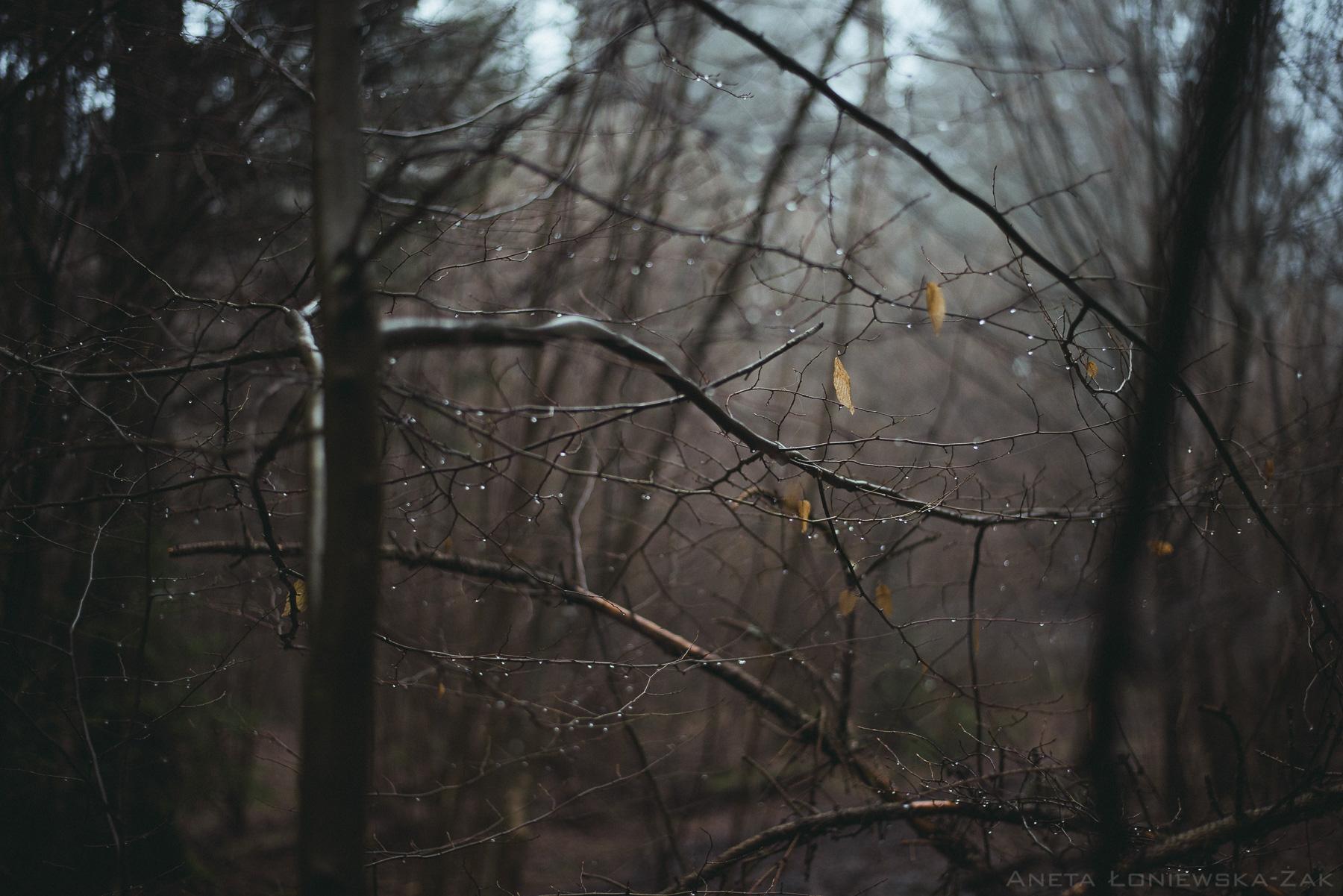 fotografia przyrodnicza podlasie, puszcza knyszyńska, podlasie, fotograf ślubny białystok, rezerwat krzemianka, nadleśnictwo knyszyn