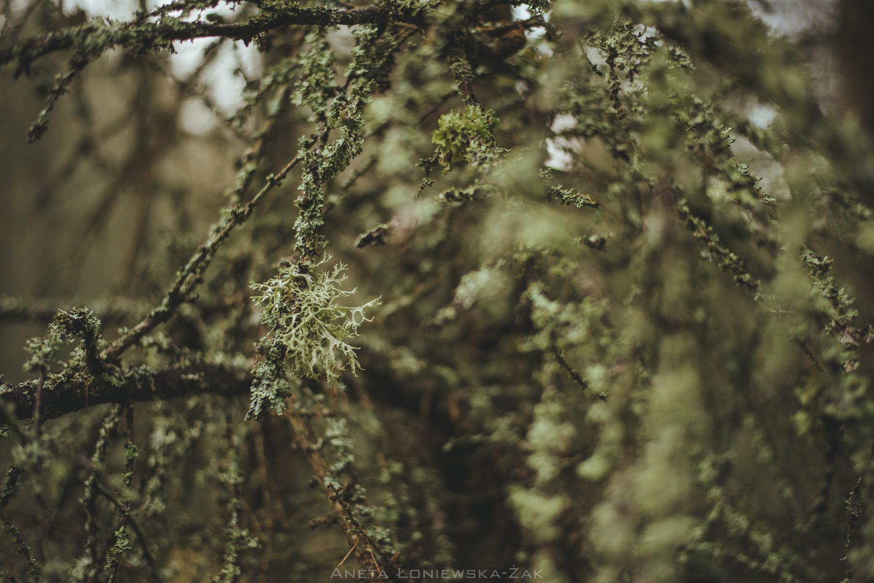 fotografia przyrodnicza podlasie, puszcza knyszyńska, podlasie, fotograf ślubny białystok