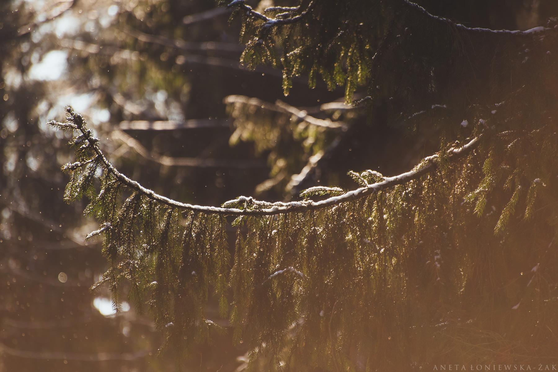 puszcza knyszyńska, dzikie podlasie, aneta łoniewska-żak