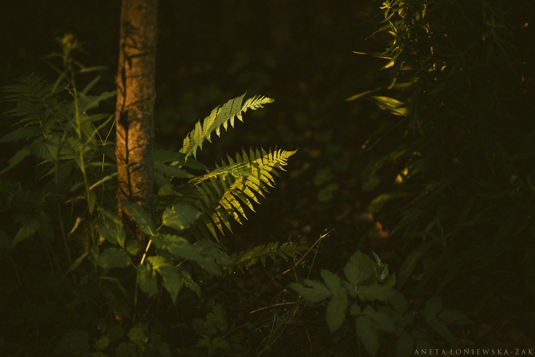naturalna fotografia białystok, puszcza knyszyńska,